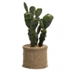 cactus mediano